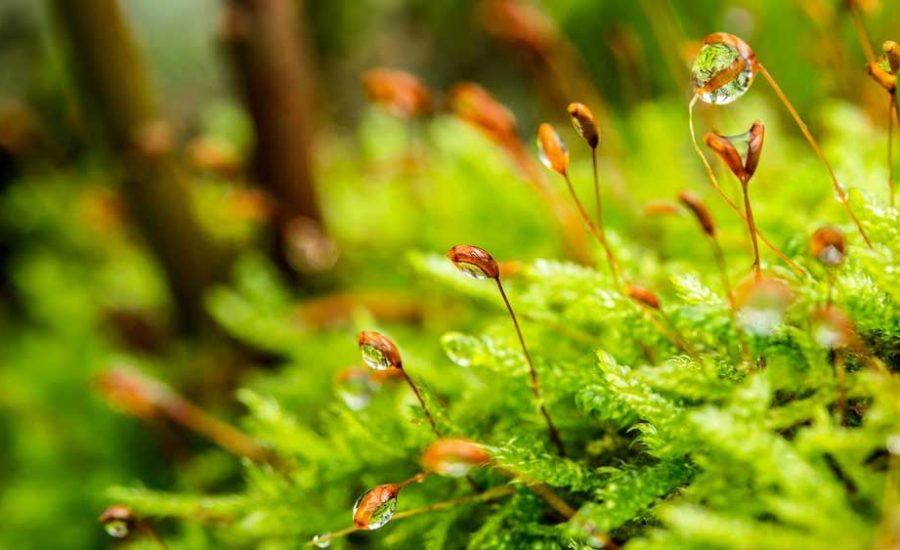 Riserva Naturale Orientata-Bosco di Malabotta Sentiero Faggita
