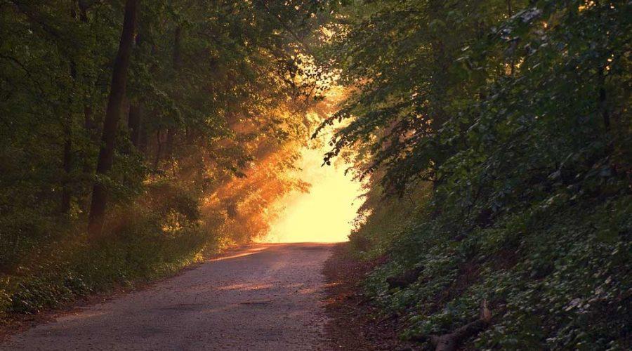 Sentiero nel Bosco Malabotta